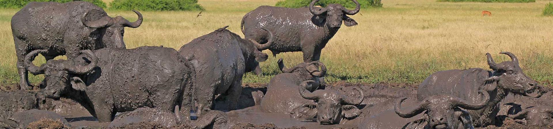 10-Day-Uganda-Safari-Rafting,-Primates,-Big-5-Wildlife-Tour