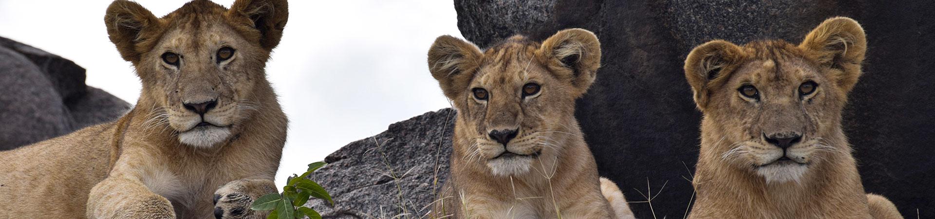 3-Days-Budget-Safaris