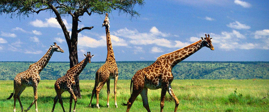 4-Days-Tanzania-Camping-Safari.