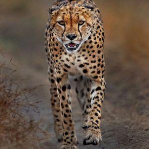 5-Day-Tanzania-Luxury-Safari