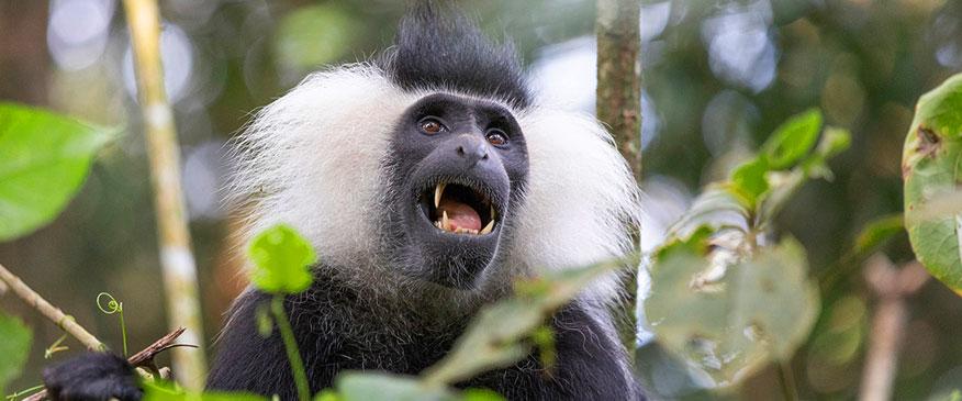 6-Days-Trip-Rwanda-Safari-in-Nyungwe