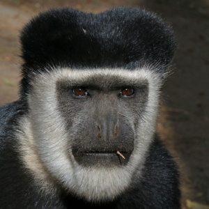 6-Days-Trip-Rwanda-Safaris-in-Nyungwe-National-Park
