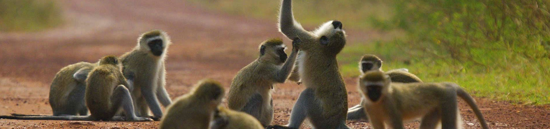 7-Days-Monkey-Akagera-National-Park