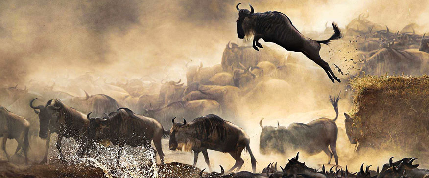 7-Days-wildebeest-Migration