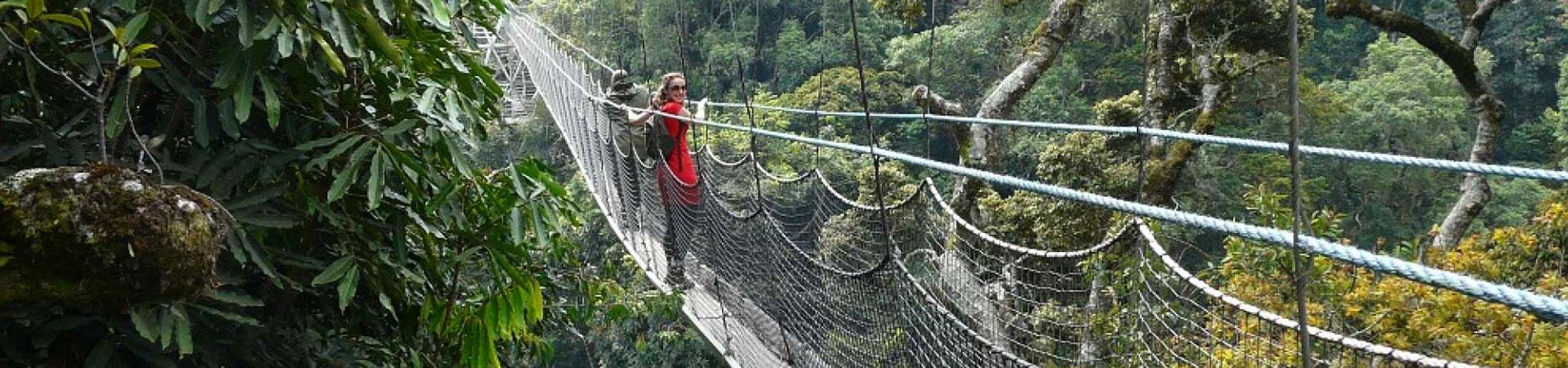 9-Days-Canopy-Walk-Rwanda-Nyungwe-National-Park