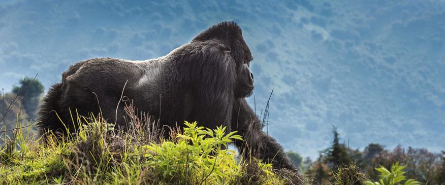 9-Days-Volcanoes-Trip-Rwanda-Safaris