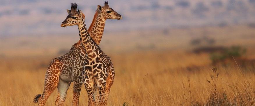 Kenya-12-Days-Bush-and-Beach-Family-Safari.