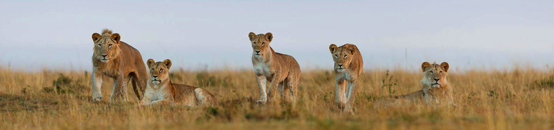 Kenya-6-days-BIG-5-Conservancy-Safaris.