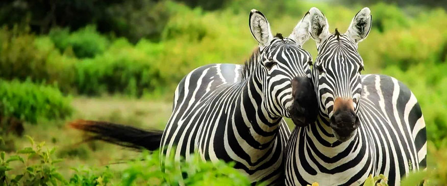 Kenya-6-days-BIG-5-Conservancy-Safaris