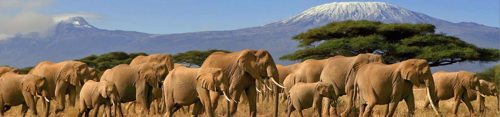 Kenya's-Family-Safari---Best-for-teens-9-Days..