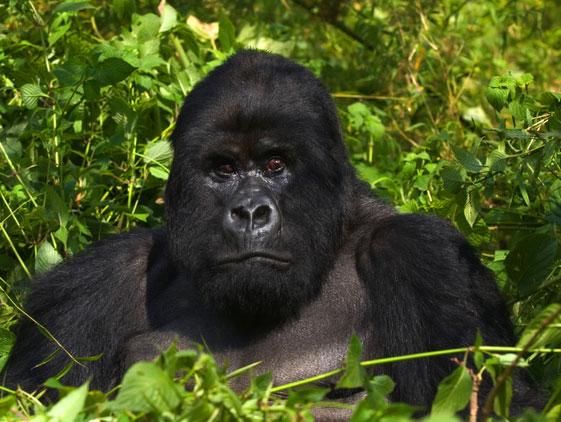 Rwanda-Destination