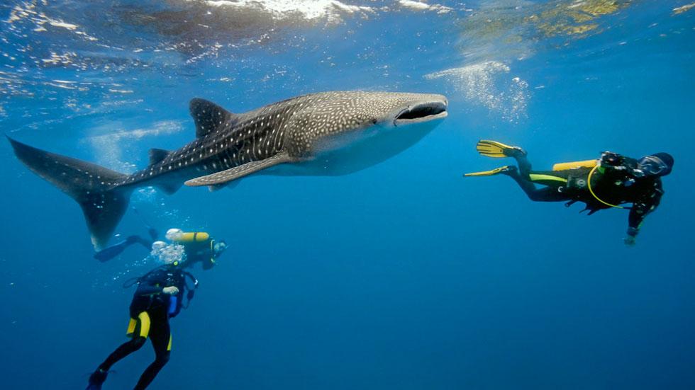 Scuba-Diving-Tour-Zanzibar