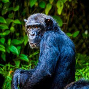 Uganda-7-Days-Primates-and-Wildlife-Safari