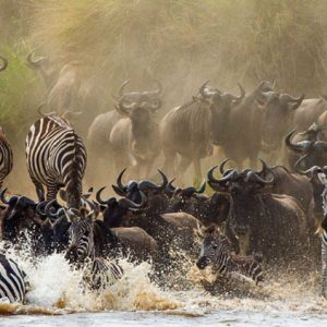 10-Day-Serengeti--wildebeest-migration-Fly-in-Drive-out