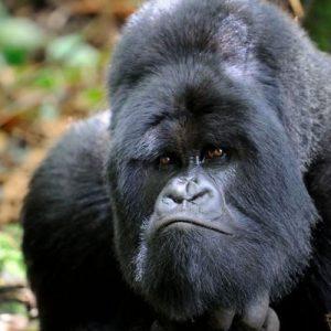 15-Days-Rwanda-Tour-Safari