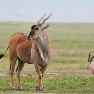 3-Day-Budget-Selous-Game-Reserve