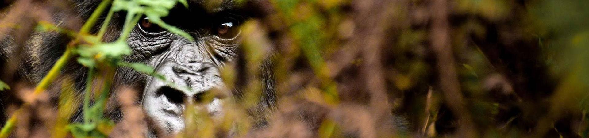 3-Day-Rwanda-Gorilla-Trekking