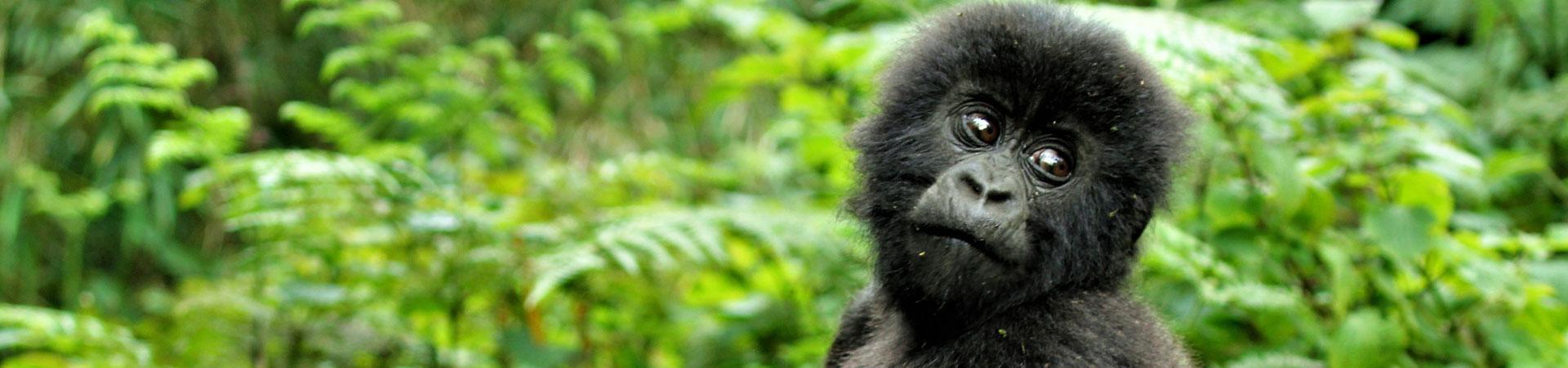 5-Day-Uganda-Safari
