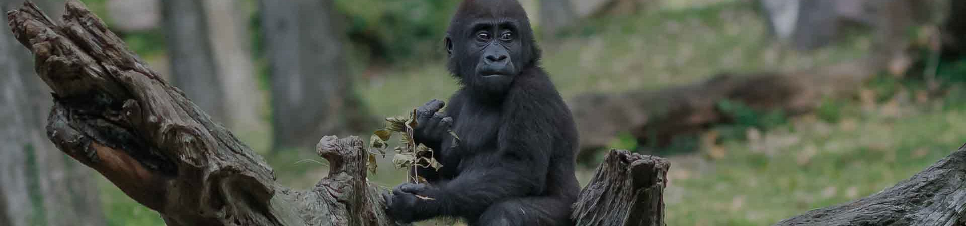 6-Days-Gorillas-Wildlife-and-forest-Walks-Uganda