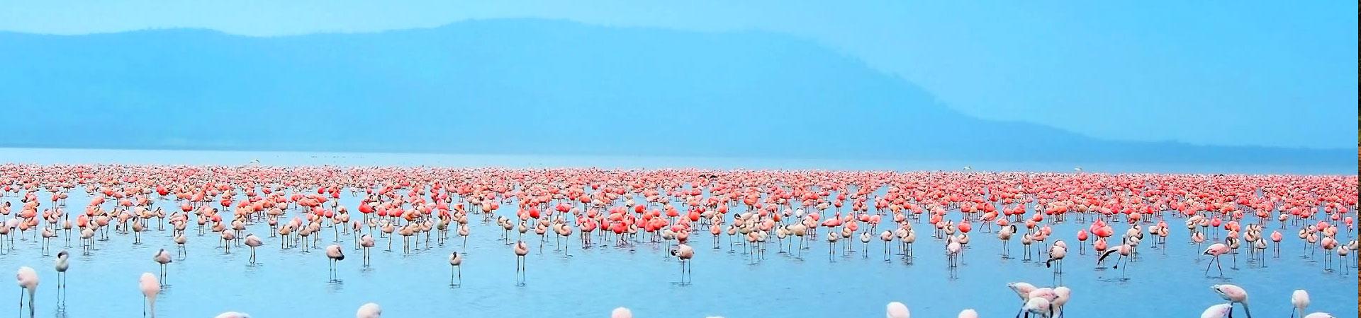 7-Day-Tsavo,Nakuru,&-Masai-Mara-Kenya