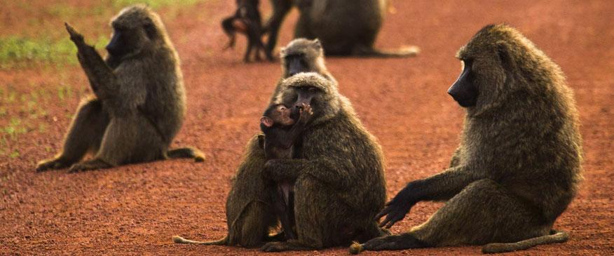 8-Days-Rwanda-Classic-Tour-Safari-Canopy-Walk
