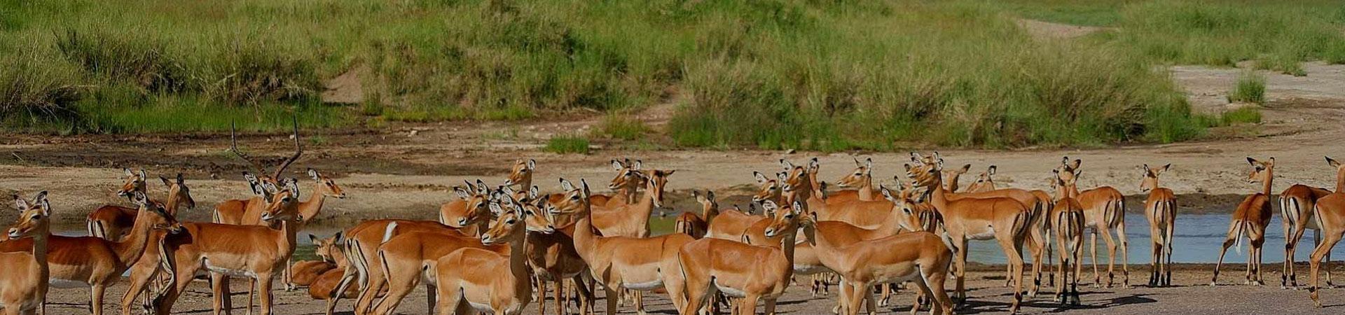 Arusha-National-Park-Gazelle
