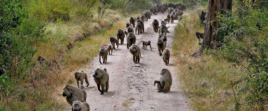 Baboon-Lake-Manyara