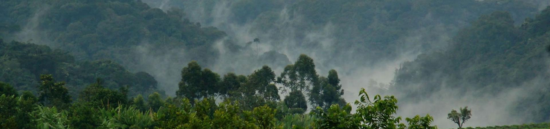 Bwindi-Forest-Uganda-Destination