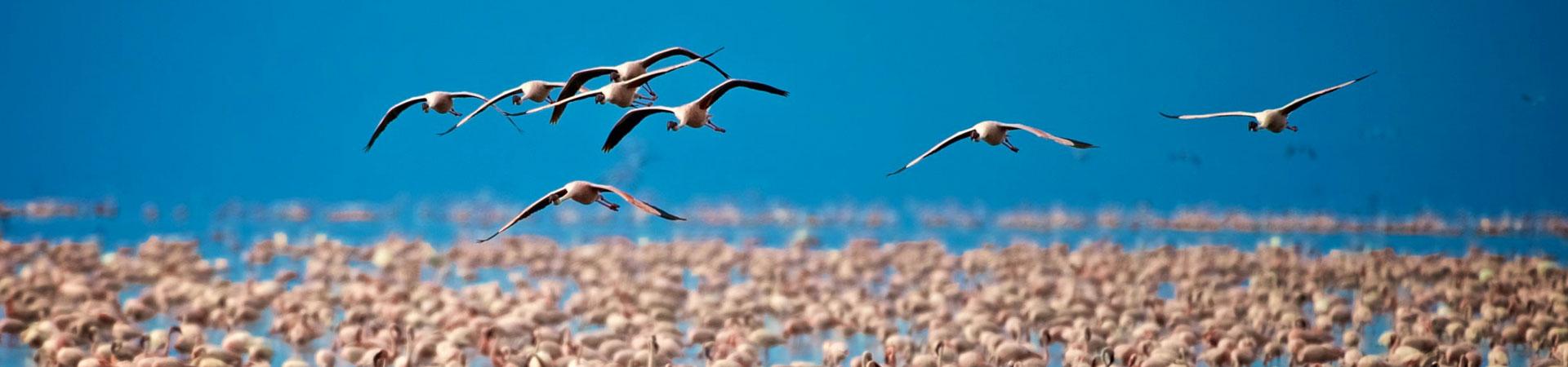 Day-Trip-To-Lake-Manyara-National-Park