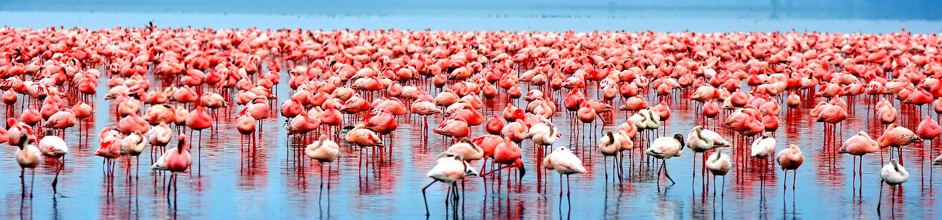 Flamingo-in-lake-manyara